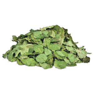 dried moringa leaves suppliers