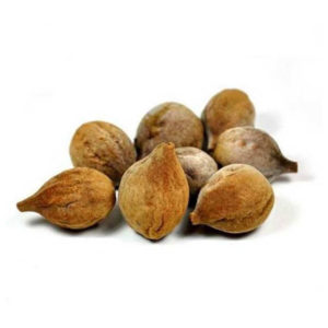 Dry Myrobalan Seeds Suppliers