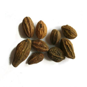 Wholesale Dry Myrobalan Seeds