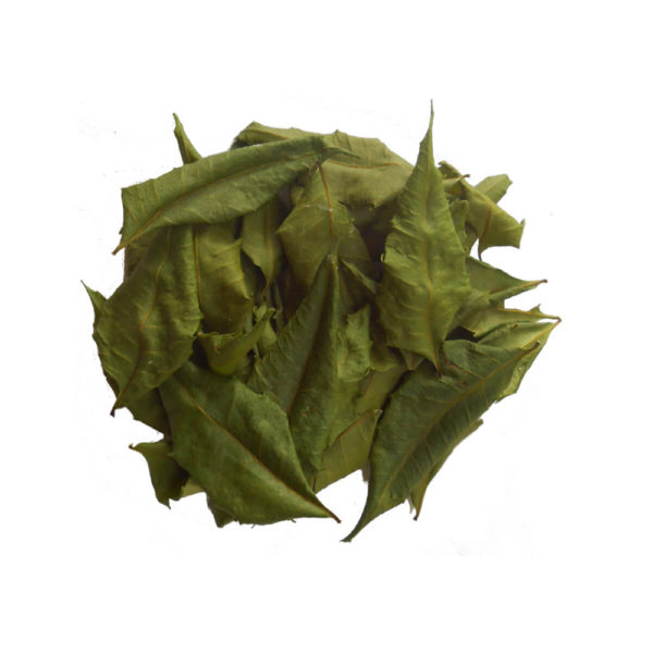 dry neem leaves suppliers